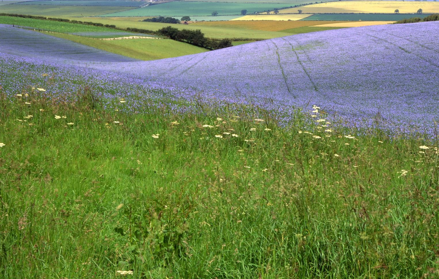 The lovely Yorkshire Wolds