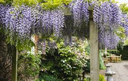 Garden lovers' paradise