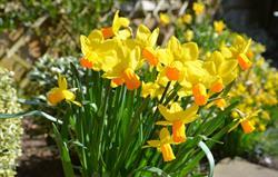 Easter/spring breaks - see website