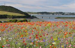 Wildflower meadow views