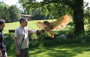 Birds of Prey Experiences with our birds