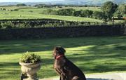 Hattie admiring the view