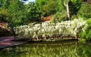 Wisteria Bridge