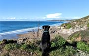 Dog-friendly beaches nearby