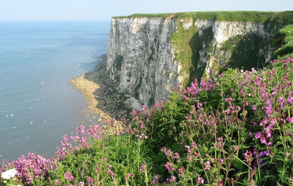 Bempton Cliffs, East Yorkshire