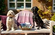 Very Dog friendly luxury holiday cottages