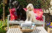 Very Dog friendly holiday cottages