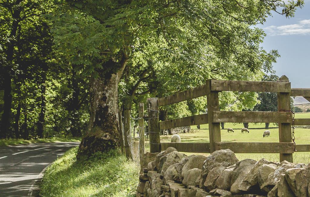 Broadmea Farm