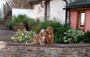 Spaniels on a wall at Cider Cottage