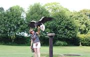 Bird of Prey Centre -The Off
