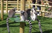 Enjoy a day out at Drusilla's Zoo Park