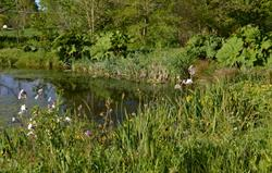 Wildlife pond