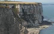 Cliff top Bempton