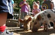 Clydey Daily Animal Feeding