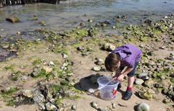 Crabbing at West Runton