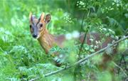 Deer from cottage deck