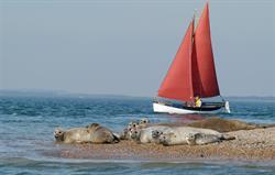 Seals at Morston