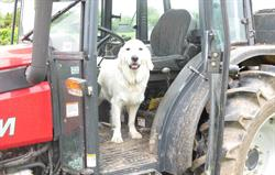 Ruby the tractor driver