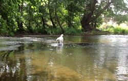 Ashford Carbonell, River Teme.