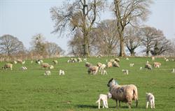 Spring at Ashford Farm.
