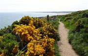 Superb coastal and hill walking