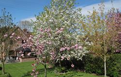 Spring blossom in Threshers garden