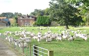 Other guests at Ashford Farm.