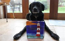Award winning dog-friendly cottages