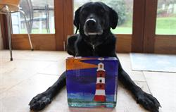 Award winning dog-friendly cottages