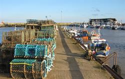 Brid Harbour