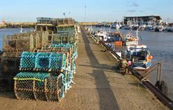 Brid Harbour 2