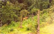 Deer in cottage garden