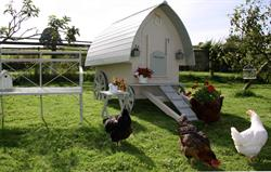 Even our hens are pampered