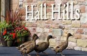 Hall Hills