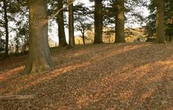 Gatcombe wood