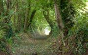 The lords path, leading to Flear