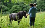 Flear Farm Feeding the Horses