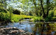 Flear Farm Stream