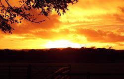 Sunset at Scolton