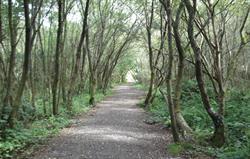 Woodland Walk at Scolton Manor