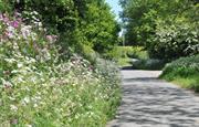 Leafy lanes full of spring flowers