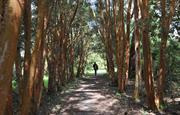 Woodland walk at Picton Castle