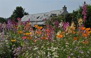 Summer flowers at East Jordeston