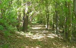 Brokenheugh woodland