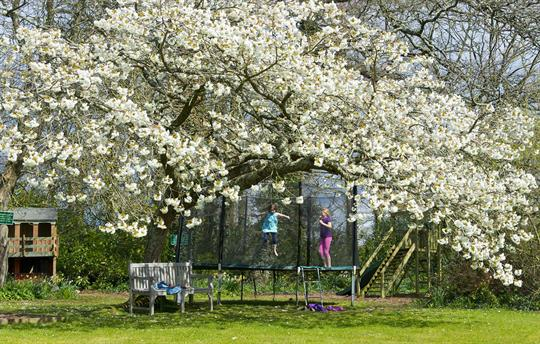 Spring at Broomhill Manor