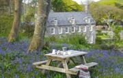 Tea in the Bluebell wood