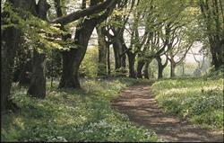 Trelowarren walks through estate
