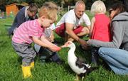 Interactive animal feeding