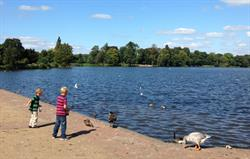 Feed the ducks, Ellesmere