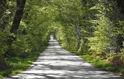 Nearby leafy lane walk in Spring